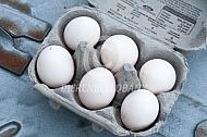 Eieren van het lakenvelder hoen
