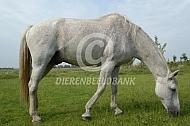 Oud paard van 28