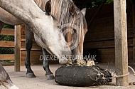 Paarden eten hooi uit hooitas