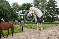 Paarden in het Paddock Paradise