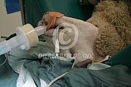 veterinair