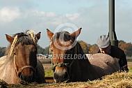 Rustende trekpaarden
