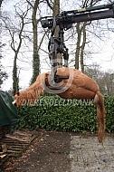 Rendac haalt pony op