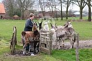 Lama's en ezels