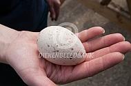 Ei van een kalkoen