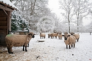 Hampshire Down in de sneeuw