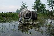 Paard drinkt uit poel
