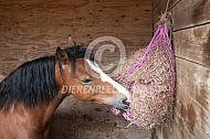 Paard eet hooi uit hooinet