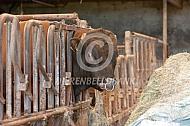 Lakenvelder stier op stal