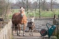 Haflinger paard met ezel in paddock
