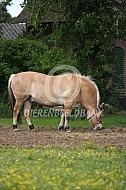 Veel te dik paard (fjord)