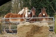 Trekpaarden met pak kuilvoer