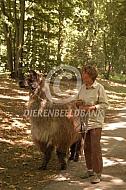 Met een lama aan de wandel