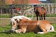 Paard komt langzaam bij uit narcose
