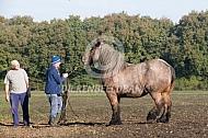 optuigen Belgisch trekpaard