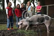 Bonte Bentheimer op de kinderboerderij