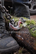 Ketting voor het boomslepen