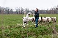 Trainen van een Lama