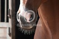 Tastharen paard