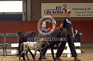 Falabella paardje op keurinf