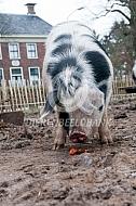 Bente Bentheimer eet een wortel