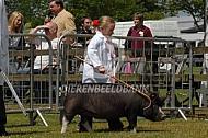 Keuring van varkens in Engeland (Berkshire)