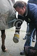 Behandeling hoefzweer bij paard