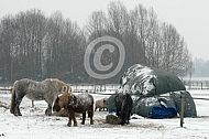 Paard en pony in de winterkou