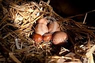 Legnest met afwijkende eieren