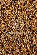 Kippenvoer (gemengd graan)