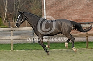 Galopperend paard
