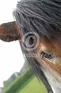 Close-up hoofd trekpaard