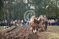 Ploegen met  trekpaarden