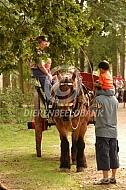 Trekpaard voor boerenkar