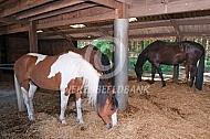 Paarden in de schuilstal (mansour)