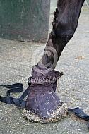 Paard met hoefzak