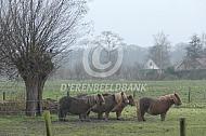 Pony's in de regen