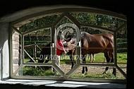 Paard krijgt pluk gras