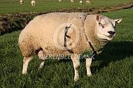 Ram met dektuig