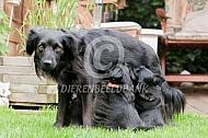 Markiesje met pups