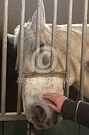Paard achter de tralies op stal