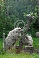 Drentse heideschaap eet van boom