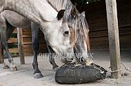 paarden eten hooi  uit slowfeeder