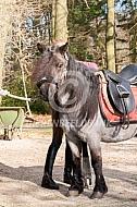 Opzadelen van de pony