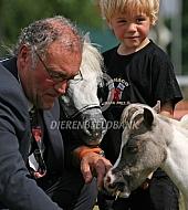 Keuring Amerikaanse miniatuurpaard