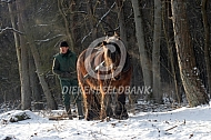 Boomslepen met trekpaard