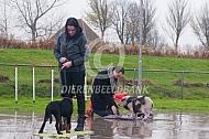 Göttingen minivarken tijdens puppycursus