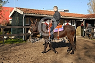Pyrenese ezel