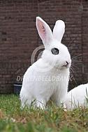Witte van Hôtot