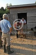 Huiskeuring Drentse heideschapen